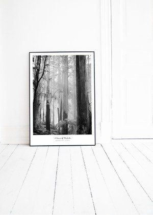 FOREST photo print by Pernilla Algede. Buy at houseofbeatniks.com