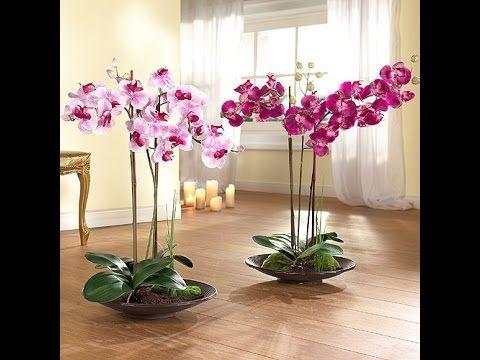 Как быстро размножить орхидеи! Потом они цветут как сумасшедшие! | Trimay.ru