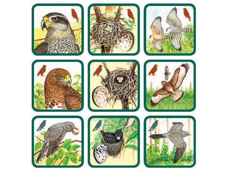 Pexetrio Plus - Znáš naše ptáky?