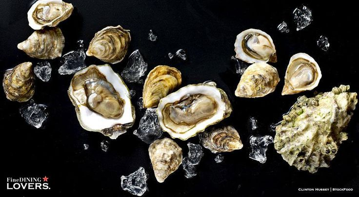 Interesting oyster facts and figures you can't miss if you like this gourmet delicacy from the sea, perfect during holiday meals.