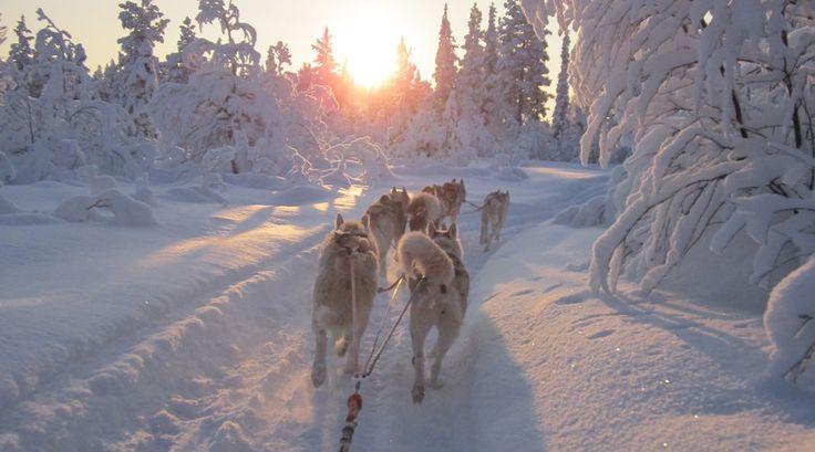 Lapland, waar je niet alleen sneeuw en ijs vind, maar ook wat warmte, lieve husky's en een hele hoop gezelligheid.
