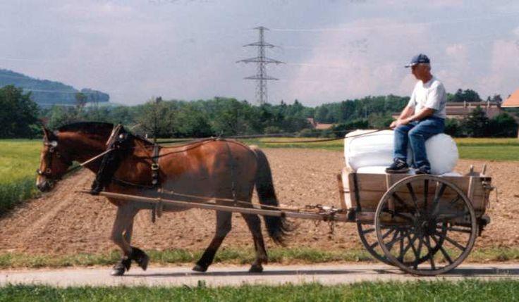 IG OFM - Das Original Freiberger Pferd