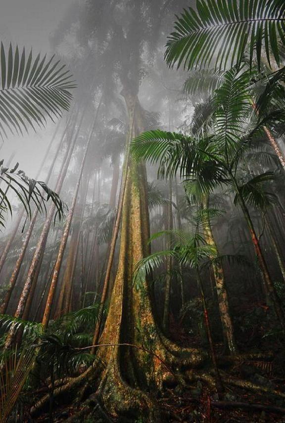 Mens Silk Pocket Square - Rain Forest 3 by VIDA VIDA b0CyBZ