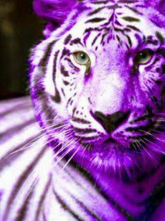 Purple Tiger Stargazer Nail Art Designs By Top Nails: 119 Best Tiger's Images On Pinterest