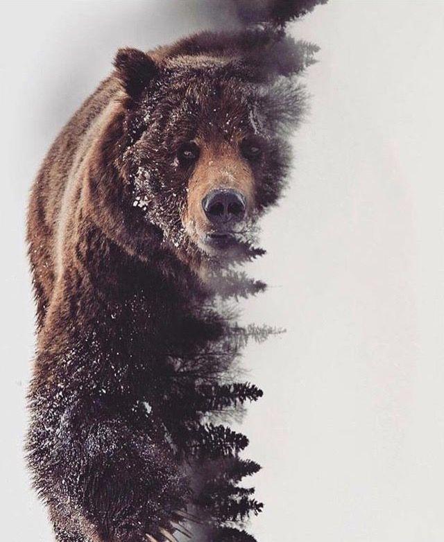 Beautiful art! | Bear with me | Grizzly bear tattoos, Bear ...