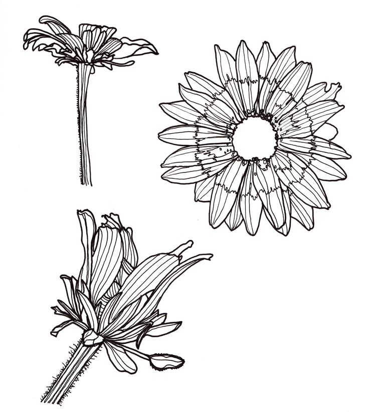 Flower Basket Line Drawing : Best images about line drawings on pinterest flower