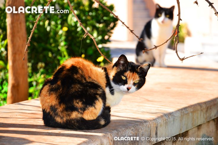 Cats in Koutouloufari
