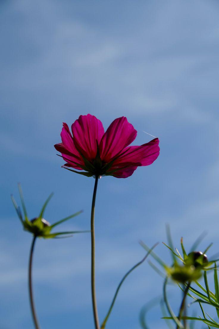 Mooi in eenvoud - gespot in de pluktuin Het Platteland in Putten #fotografie #natuur #bloom