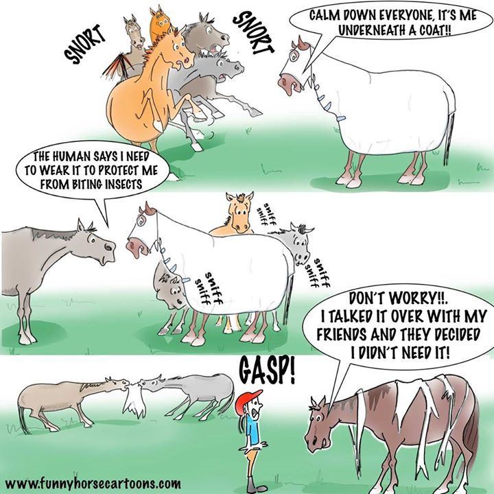 Horse cartoon jokes - photo#10