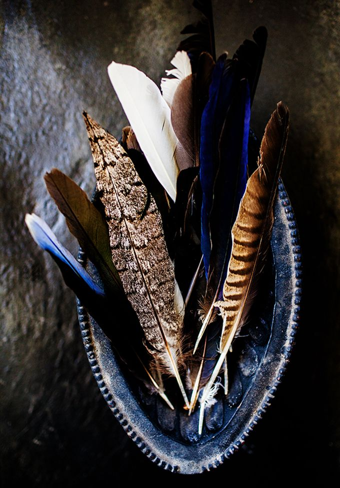 Collection of feathers - Kara Rosenlund