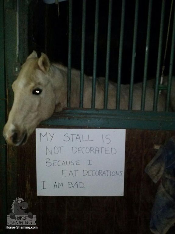 Horse-shaming.com... My stall is not decorated because I eat decorations. I am bad. LOL                                                                                                                                                                                 More