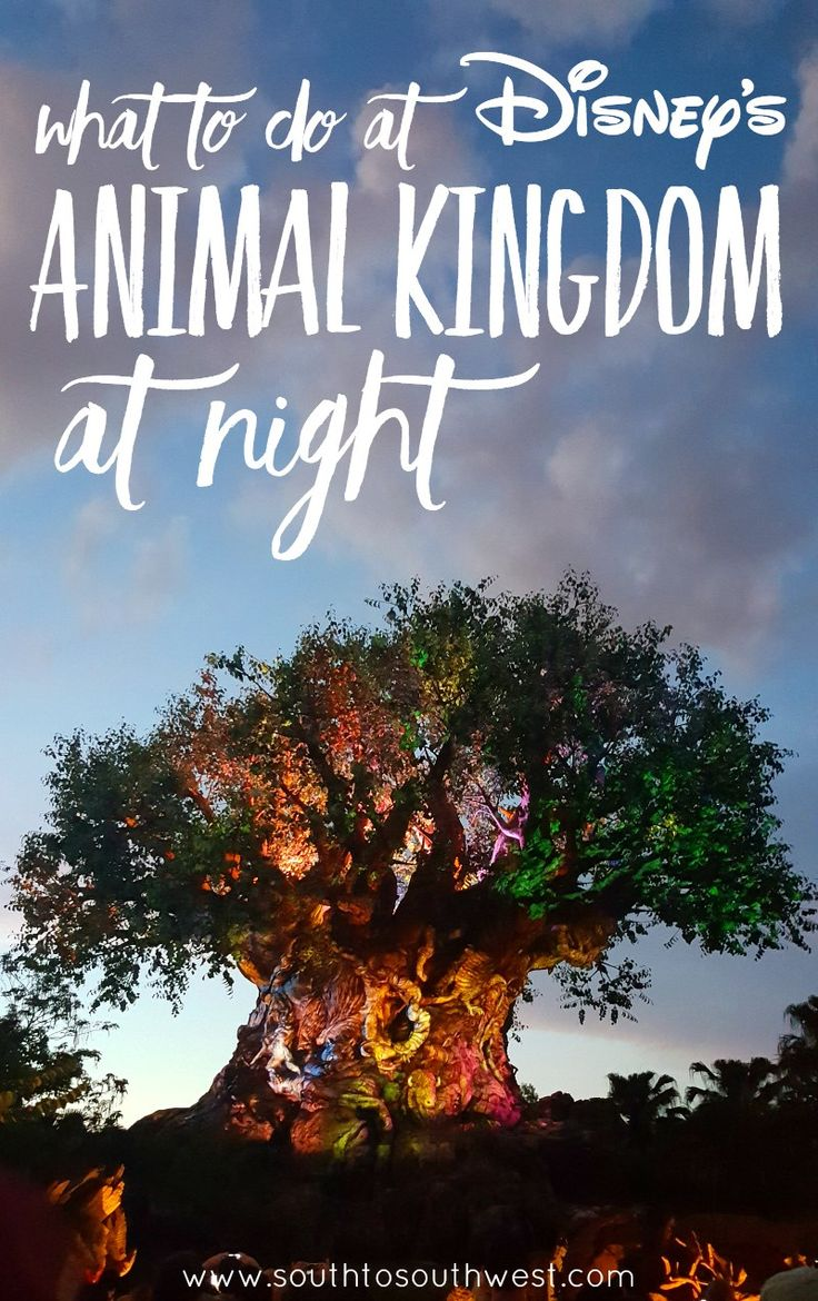 "Have you been to Disney's Animal Kingdom at night yet? We checked it out in June, and I'm sharing some ""must-do"" night time Animal Kingdom experiences!"