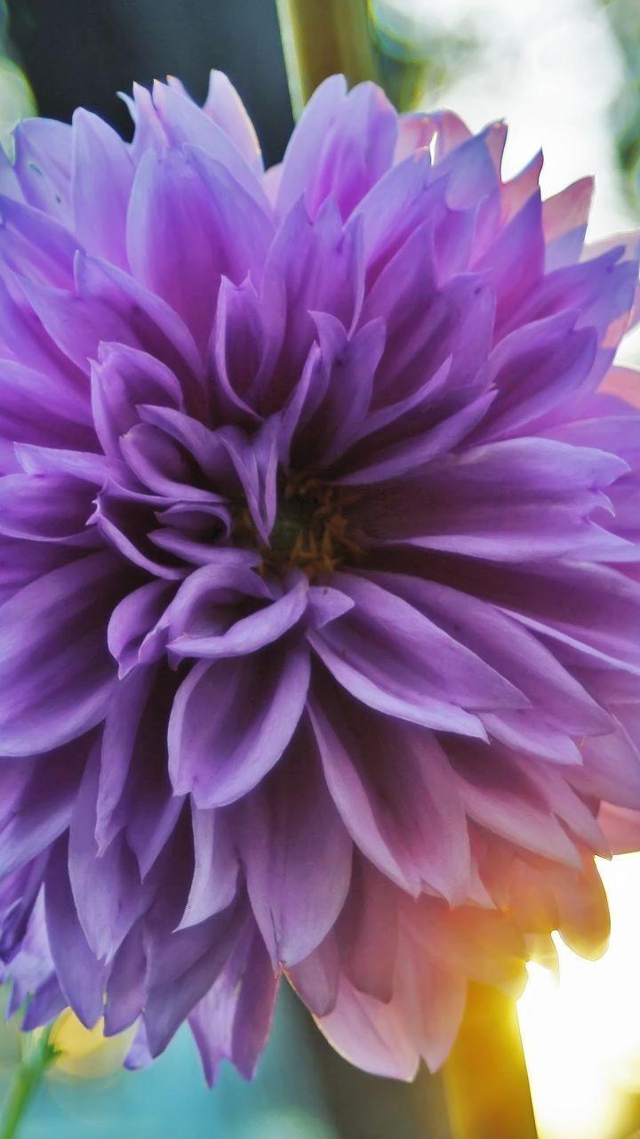 Flower Wallpaper Flowers Wallpaper Galaxy S8 Wallpaper Galaxy S8 Wallpaper Hd Hd Photo S8 Wallpaper Pink Flowers Wallpaper Android Wallpaper Flower Bokeh