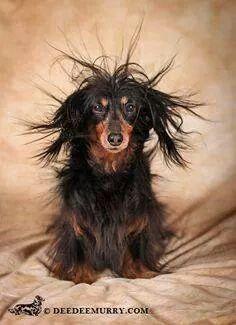 Bad Hair Bad Hair Day And Hair On Pinterest