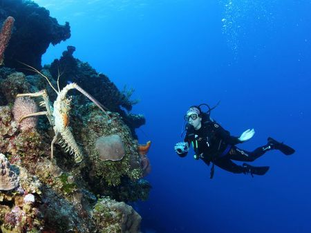 Lobster and diver at Richelieu Rock Photo by Ola Welin