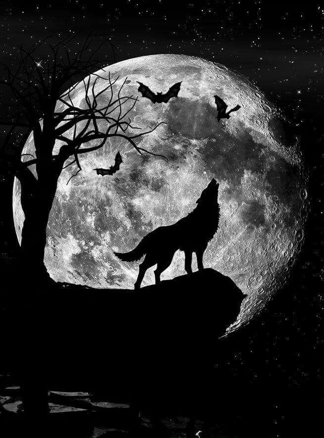 Картинки как волк на скале воет на луну