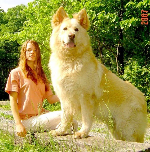 Giant Dog Breeds*please do tell me, i can have it!*