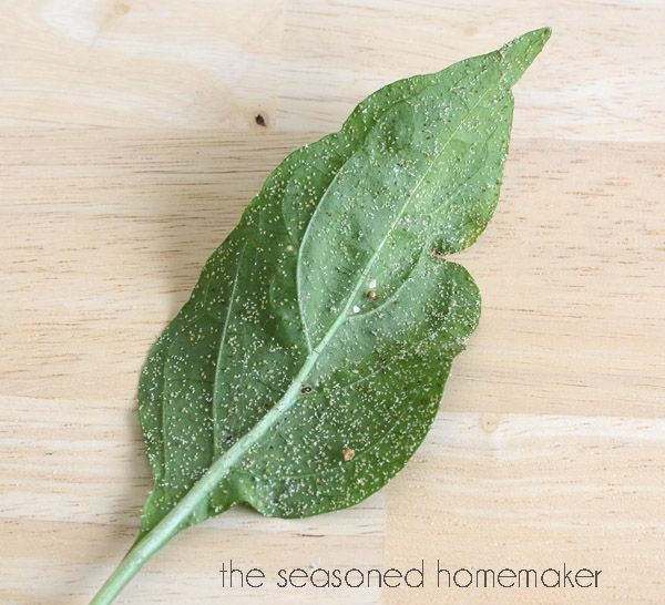 Garlic Pepper Tea: A Natural And Organic Pesticide