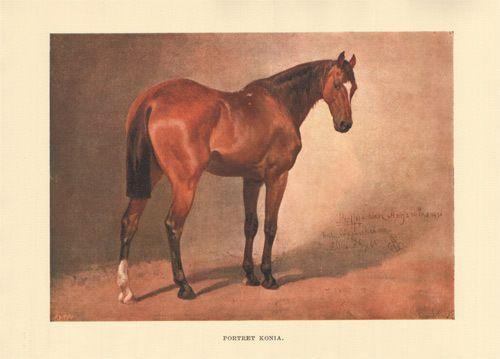 GROTTGER - PORTRET KONIA 1905 r. reprint