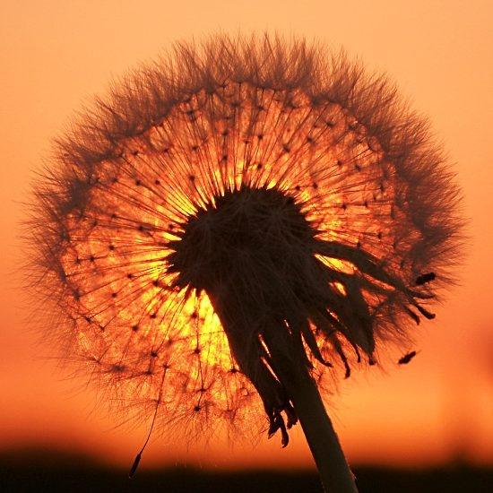 Make a wish....
