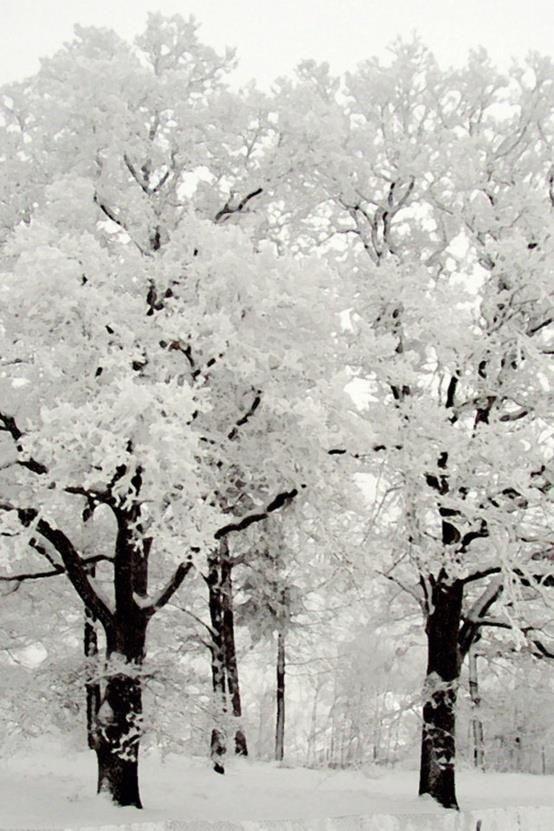 la nature blanche