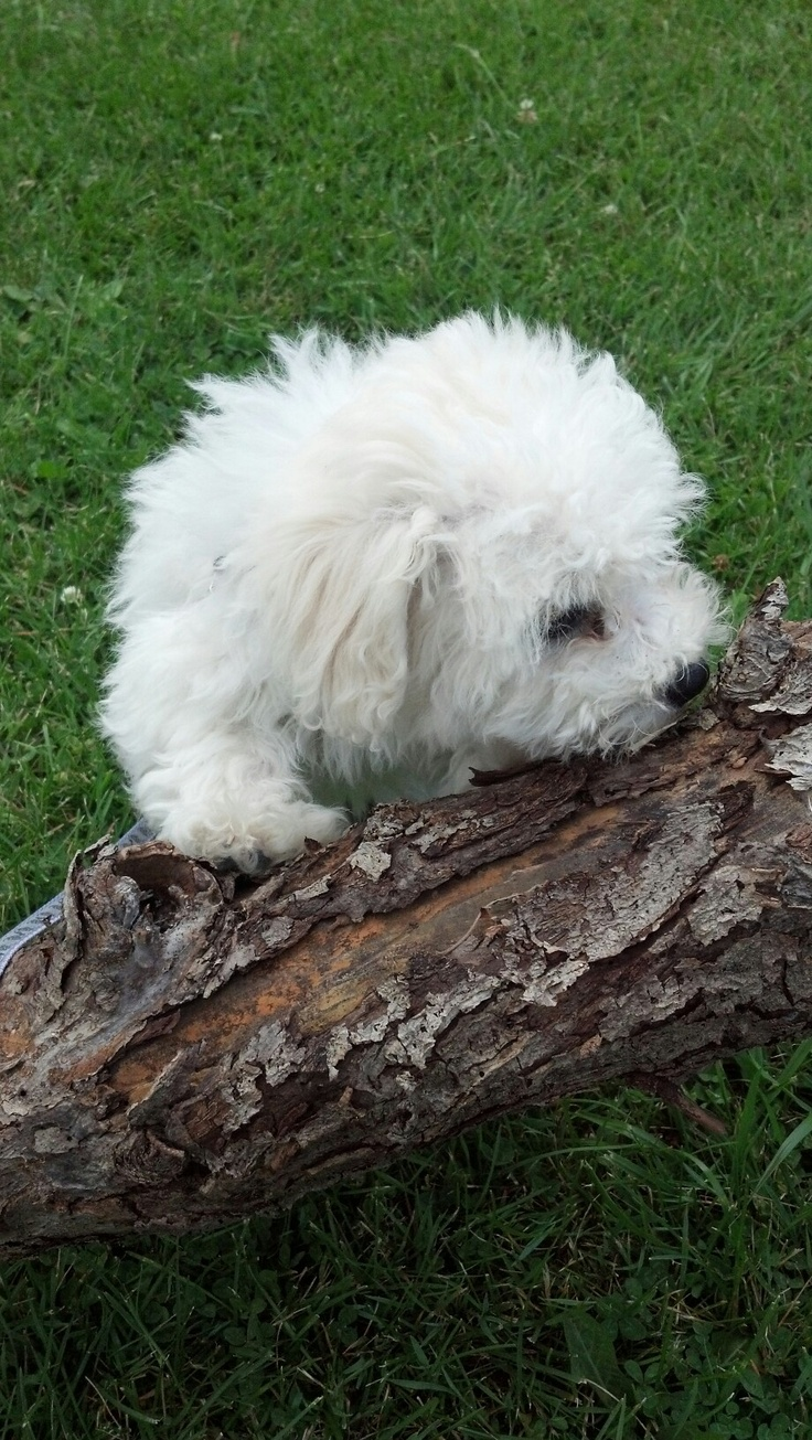 Bailey checking out the log!!