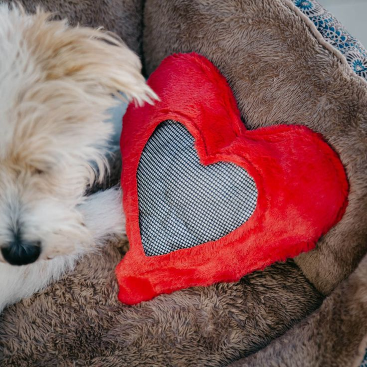 Pup parents know that our dogs love us deeply, even though they do not express it in the same manner as humans do.Recently, behavioral research saddened dog lovers when it showed that most dogs don't like to be hugged. That's not …