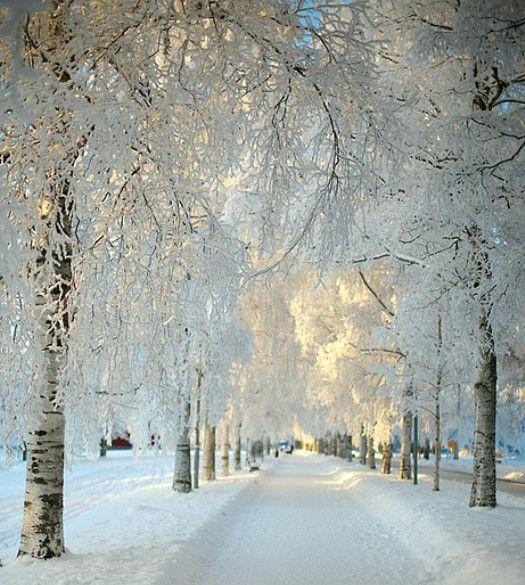 Winter Wonderland: Winter Scene, Nature, Beautiful, Snow, Winter Wonderland, Christmas, Places, Photo