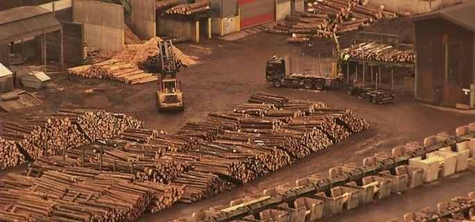 Se pierd TOATE pădurile României! Structură de crimă organizată! Dați SHARE să oprim DEZASTRUL!
