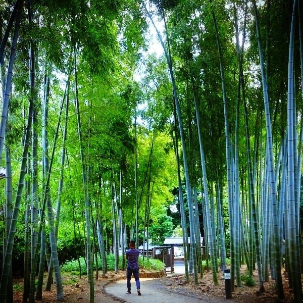 Everything Good Day: life-5-  #blogger #bamboo #forest