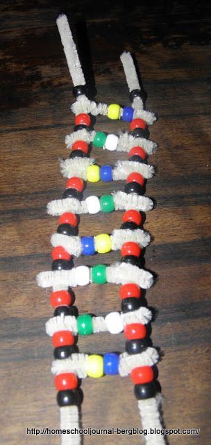 All Things Beautiful: What is Life? With pipe cleaner DNA model