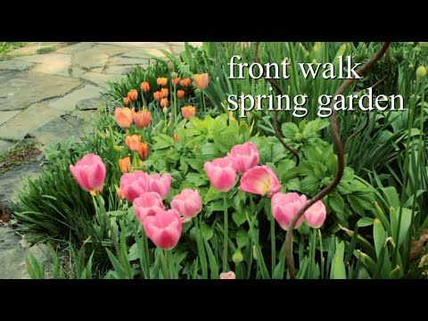 43 best around the house spring flower bulb inspiration images on fantastic video on planting flower bulbs by your front walkway mightylinksfo Choice Image