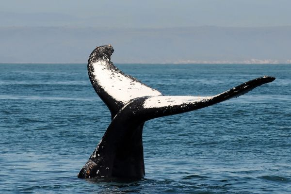 Get up close with whales and dolphins in the wild at Plettenberg Bay, South Africa