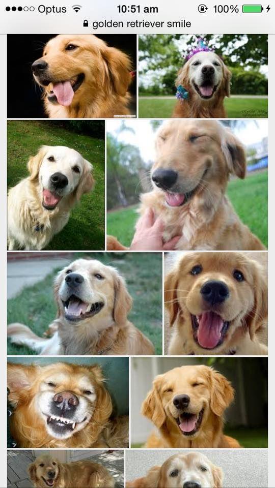 The Golden Retriever smile :)