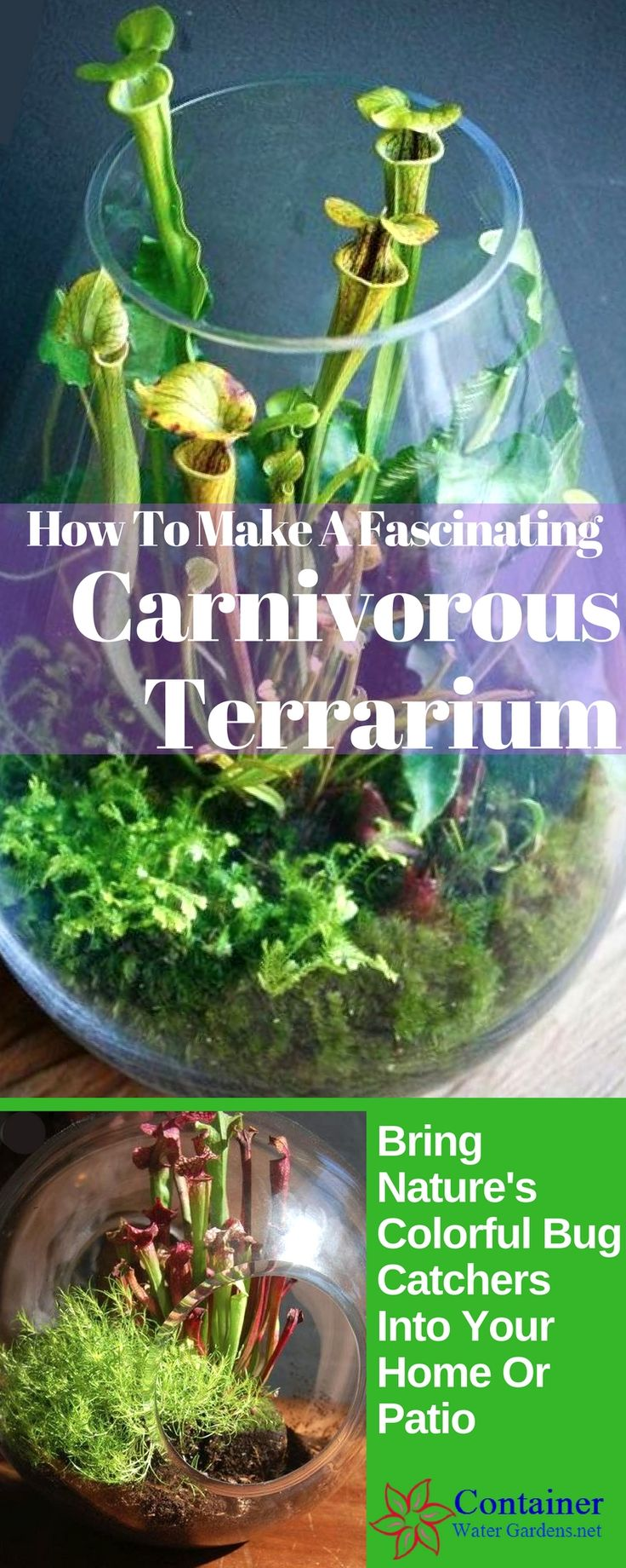 """Terrariums are pretty easy to create and care for, you may have made one in school as a science class project. Carnivorous plants will """"eat"""" flies, ants, and wasps when placed outdoors plus they come in many colorful shapes and sizes. Watching them catch bugs adds even more interest. Pitcher plants alone have a variety of beautiful colors... (click through to read more)"""