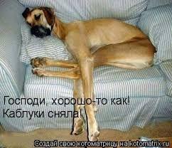 Картинки по запросу смешные животные фото