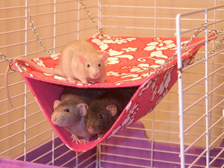 rat hammock - Google Search