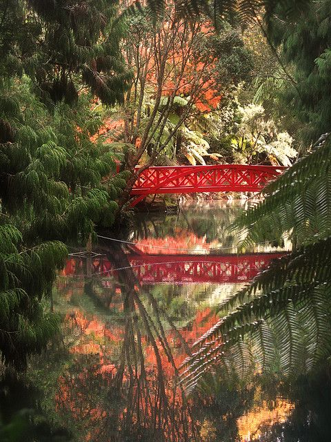 Reflections in Pukekura Park, New Plymouth, New Zealand (by Peter Kurdulija).