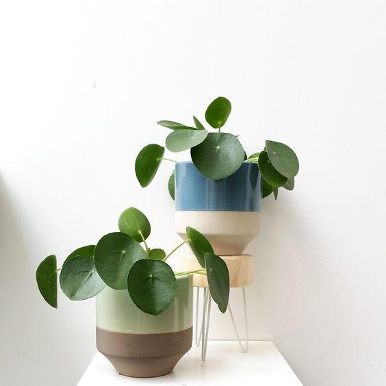 Plus de 25 id es uniques dans la cat gorie pot de fleur - Grande plante d interieur facile d entretien ...