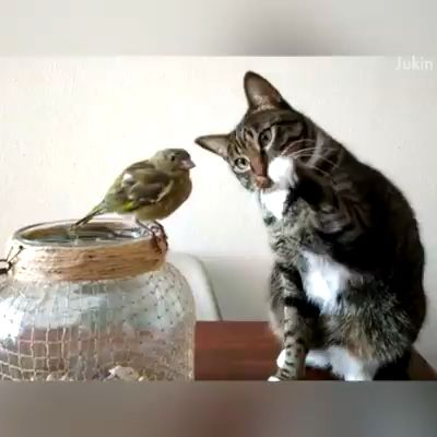 Cute compilation of birds and animals