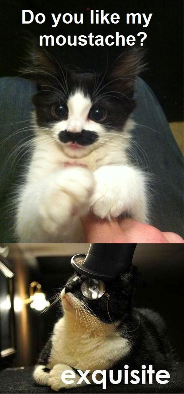 Tom Selleck's cat?