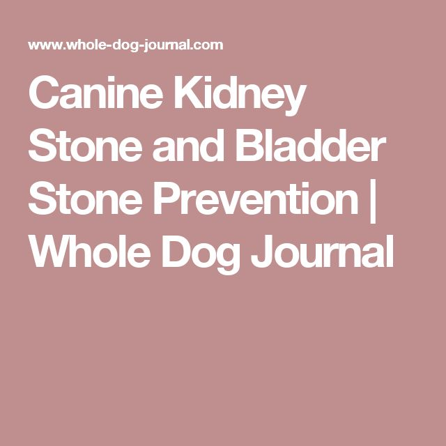 Homemade Dog Food For Dogs With Kidney Stones