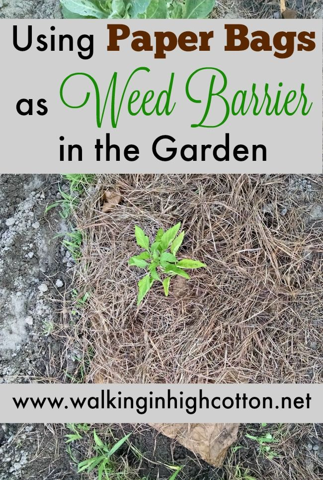 Using Paper Grocery Bags as Weed Barrier in the Garden