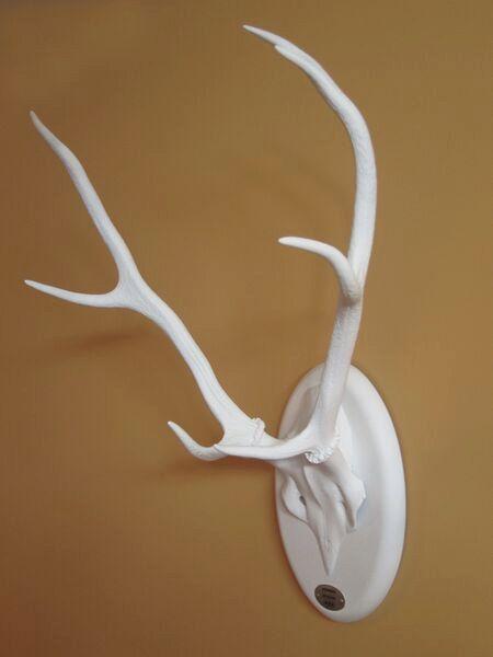 Cuernos de ciervo pintados. Decoración perchero de por MBMsons