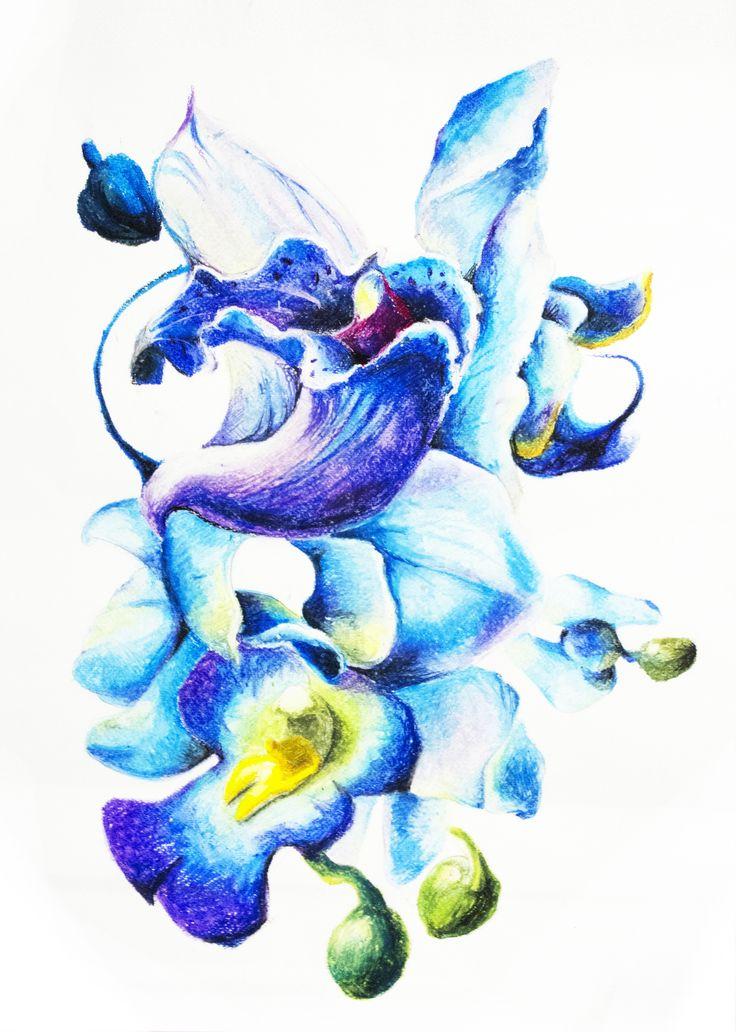 flower, cubism, oil pastel, blue _2015 by su jin kim