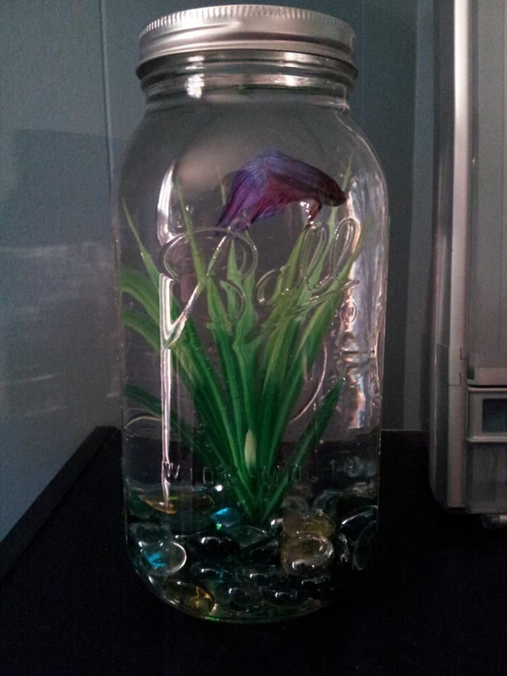 55 best images about pet fish on pinterest tropical fish for Fish in a jar