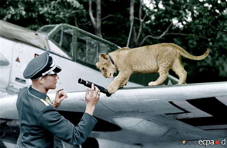 Leutnant Franz von Werra ('The One That Got Away') - BF109 E4 - II.JG 3. - Wierre au Bois, France - Aug.'40 (with his pet lion cub 'Simba') ECPAD