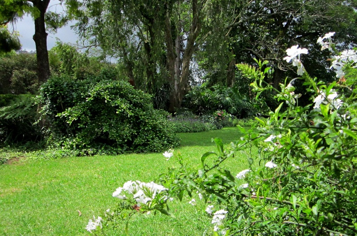 The shade garden with a beautiful flowering white plumbago