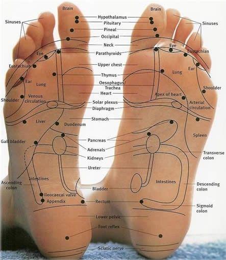 Massagem nos pés!  Os órgãos de seu corpo tem seus toques sensoriais na parte inferior de seu pé, se você massagear esses pontos que você vai encontrar alívio de dores e dores, como você pode ver o coração está no pé esquerdo. Normalmente eles são apresentados como pontos e setas para mostrar qual órgão ele se conecta. Na verdade, é correta, já que os nervos ligados a esses órgãos terminam aqui.