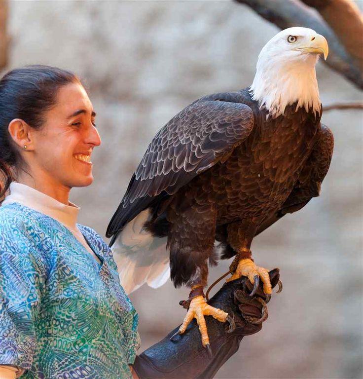 peregrine falcon wingspan